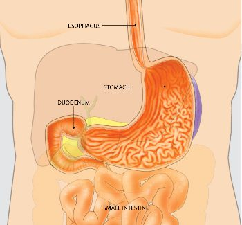 examine the rectum and sigmoid colon